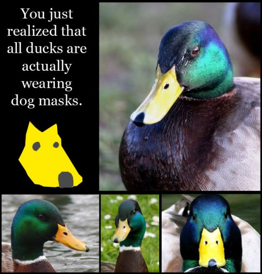 You'll Never Look at a Duck the Same Way